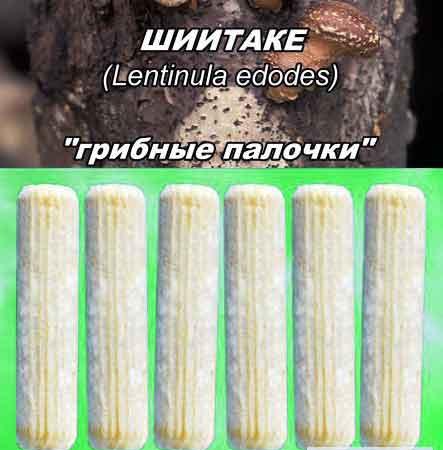 мицелий на палочках