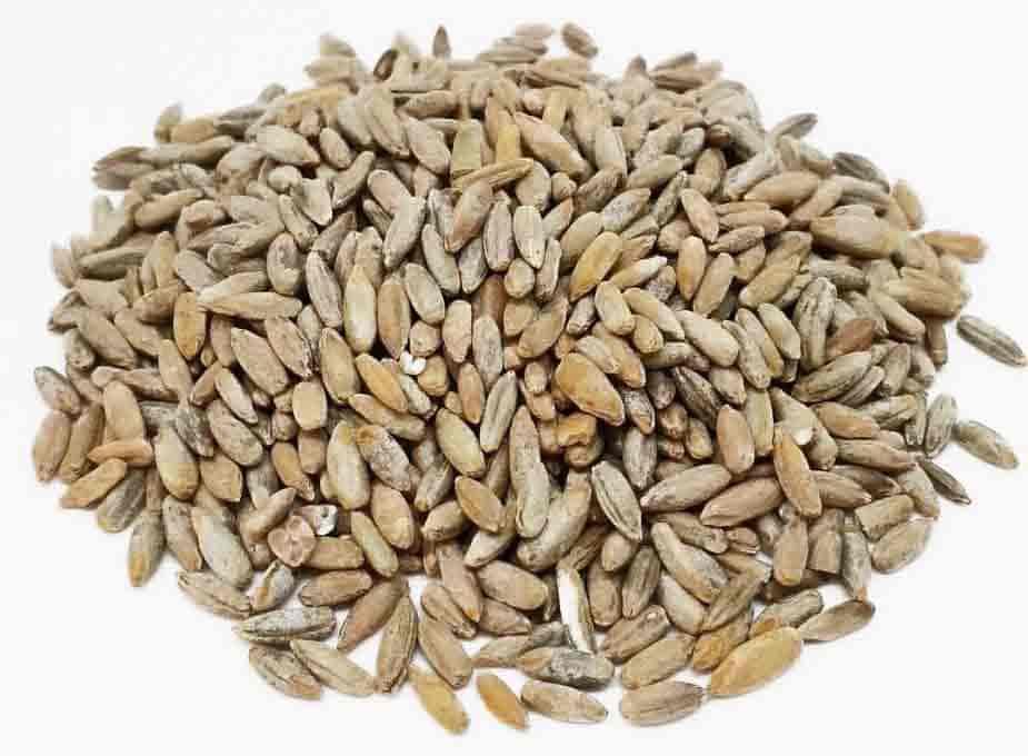 зерновой мицелий своими руками